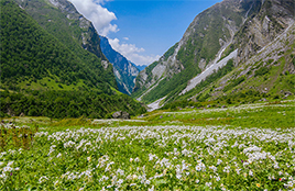 The Valley of Flowers